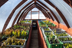 Wooden greenhouse Stock Images