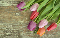 Wooden grey brown empty copy space background with colorful tulips. Wooden grey brown empty copy space background with fresh colorful spring tulips. In a corner Royalty Free Stock Images