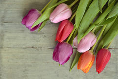 Wooden grey empty copy space background with colorful tulips. Wooden grey empty copy space background with fresh colorful spring tulips. In the corner purple Stock Photos