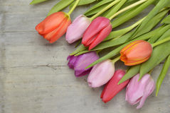 Wooden grey empty copy space background with pink tulips. Wooden grey empty copy space background with fresh colorful spring tulips. In the corner pink tulips Royalty Free Stock Photography
