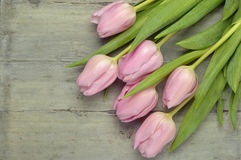Wooden grey empty copy space background with pink tulips. Wooden grey empty copy space background with fresh colorful spring tulips. In the corner pink tulips Stock Photos