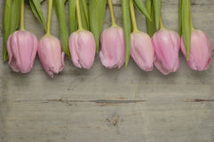 Wooden grey empty copy space background with pink tulips. Wooden grey empty copy space background with fresh colorful spring tulips. In a row pink tulips Royalty Free Stock Photos