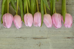 Wooden grey empty copy space background with pink tulips. Wooden grey empty copy space background with fresh colorful spring tulips. In a row pink tulips Royalty Free Stock Image