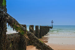 Wooden Groyne Coastal Defence Covered in Seaweed Royalty Free Stock Images