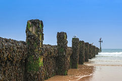 Wooden Groyne Coastal Defence Covered in Seaweed Royalty Free Stock Photo
