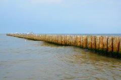 Wooden groyne and seagulls. Royalty Free Stock Image