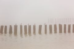 Wooden groynes at the beach of Baltic sea, Poland. Royalty Free Stock Images