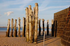Wooden groynes on the English Channel. Saint-Malo, Brittany, France Royalty Free Stock Images