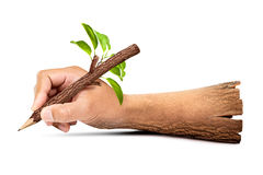 Wooden hand holding natural pencil Royalty Free Stock Photos
