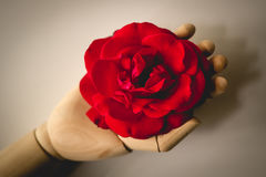 Wooden hand holding a red rose. royalty free stock images