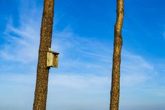 A wooden birdhouse in a pine tree outdoors. royalty free stock images