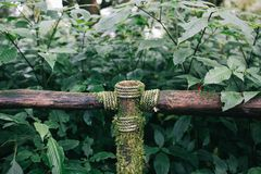 Wooden handrail with  tied rope in forest trail at Doi Inthanon national park. stock photos