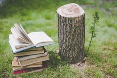 Wooden hands hold a book about trees. Template for your design. Concept of deforestation. royalty free stock image