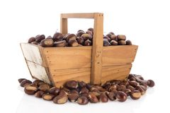 Sweet chestnuts in harvest basket. Wooden harvest basket full with sweet chestnuts isolated over white background Royalty Free Stock Photos