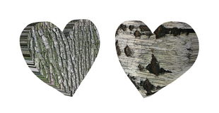Wooden heart 3d. Two figures in the shape of a heart with the texture of wood, birch and poplar  on white background Royalty Free Stock Images
