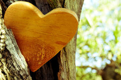 Wooden heart in the hollow of a tree, with a filter effect Stock Images