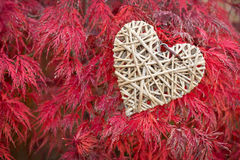 Wooden heart on red maple leaves Stock Image
