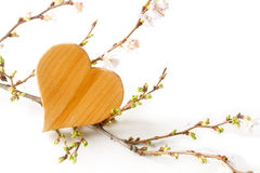 Wooden heart shape with blooming branches on a white background, Stock Image