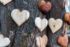 Wooden heart shapes on tree trunk. Some wooden heart shapes on tree trunk Royalty Free Stock Photos