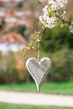 Wooden heart in Spring with blossom Royalty Free Stock Photo