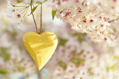 Wooden heart in Spring with blossom Royalty Free Stock Photos