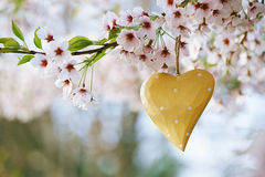 Wooden heart in Spring with blossom Stock Photo