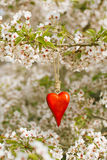 Wooden heart in Spring with blossom Stock Photography