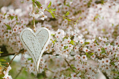 Wooden heart in Spring with blossom Royalty Free Stock Photography
