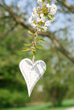 Wooden heart in Spring with blossom Stock Images