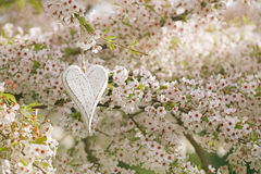 Wooden heart in Spring with blossom Royalty Free Stock Images