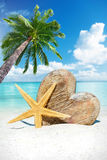 Wooden heart and starfish under palm tree Royalty Free Stock Photography
