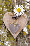 Wooden heart on tree Royalty Free Stock Photography