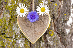Wooden heart on tree Royalty Free Stock Image