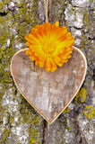 Wooden heart on tree Royalty Free Stock Photo