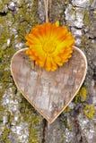 Wooden heart on tree Royalty Free Stock Photo