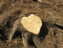 Wooden heart royalty free stock photography