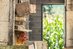 Wooden hen-coop and corn field in Yunnan province, China Stock Photography