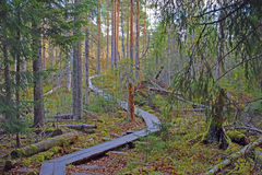 Wooden hiking path in Southern Finland. Stock Photography