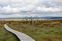 Wooden hiking path High Fens landscape Botrange Belgium Stock Images