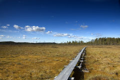 Wooden hiking trail through bog. Patvinsuo National Park, Finland royalty free stock photos