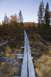 Wooden hiking trail through bog Royalty Free Stock Image