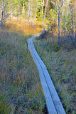 Wooden hiking trail. Through bog. Kurjenrahka National Park, Finland Stock Photos