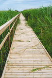 Wooden hiking trail leading through reed thicket Stock Image