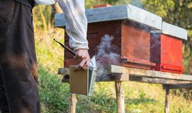 Wooden hive for bees, beekeeping, honey, health, healthy life. Active men royalty free stock photo