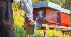 Wooden hive for bees, beekeeping, honey, health, healthy life. Active men stock image
