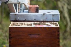 Wooden hive for bees, beekeeping, honey, health, healthy life. Bee stock photo