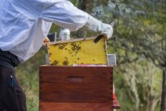 Beekeeping, man in the overalls and bee protection. Wooden hive for bees, beekeeping, honey, health, healthy life royalty free stock photos