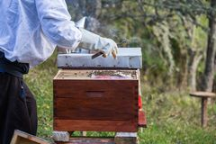 Wooden hive for bees, beekeeping, honey, health, healthy life. Bess stock images