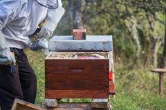 Wooden hive for bees, beekeeping, honey, health, healthy life. Active men stock images