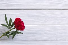 Wooden holiday frame with peony Royalty Free Stock Photos